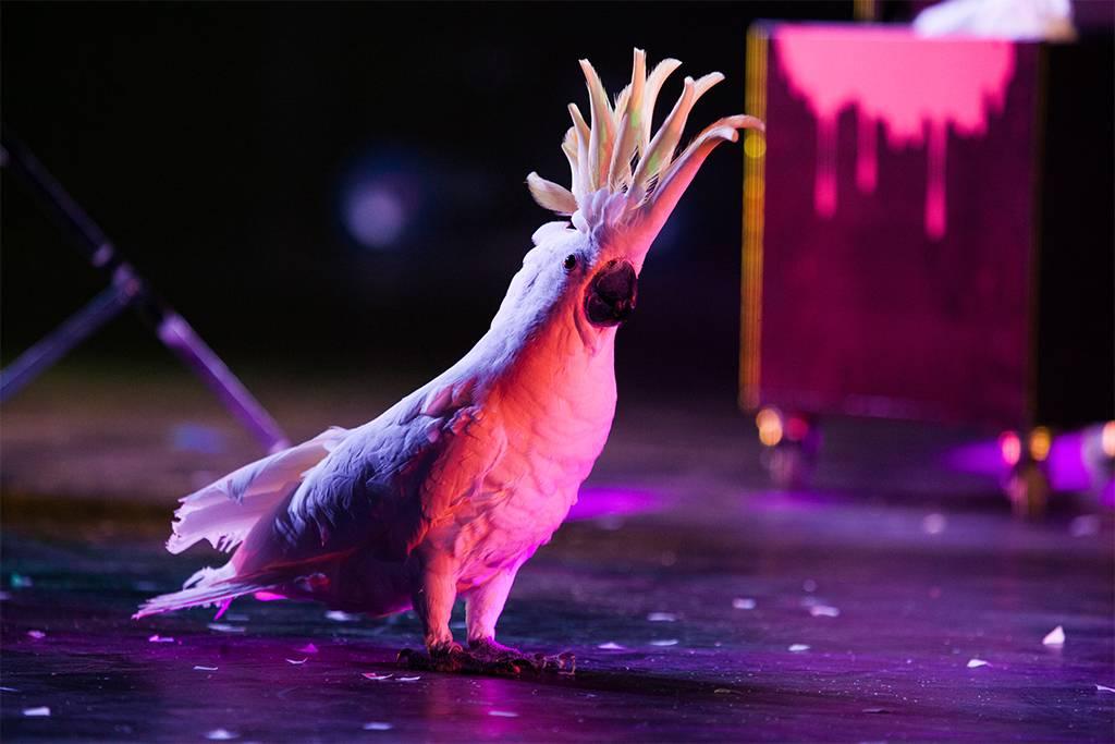 arbre_de_noel_spectacle_oiseaux_01.jpg