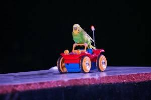arbre_de_noel_spectacle_oiseaux_02.jpg